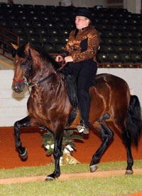 paso fino stallion Negresco